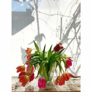 Tulips in Copier vase #tulips #copiervase #tulpen #copierglass #tulpen #spring #tulipsinvases #ilovetulips #tulip #tulpenliebe